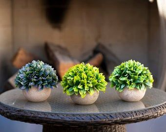 Bonsai & Flowers
